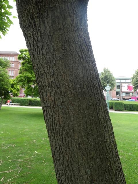 bomen op stam groen blad